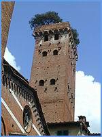 Lucca - Torre Guinigi