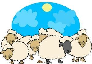 gregge di pecore