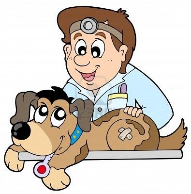 veterinario visita un cane