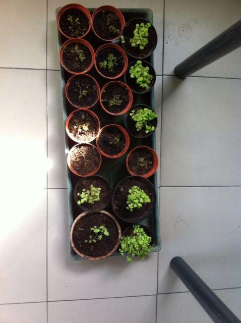 progetto ccr: piccole piante crescono