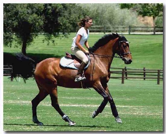 foto di una ragazza che pratica equitazione