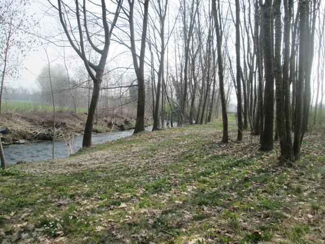 cronaca del bosco